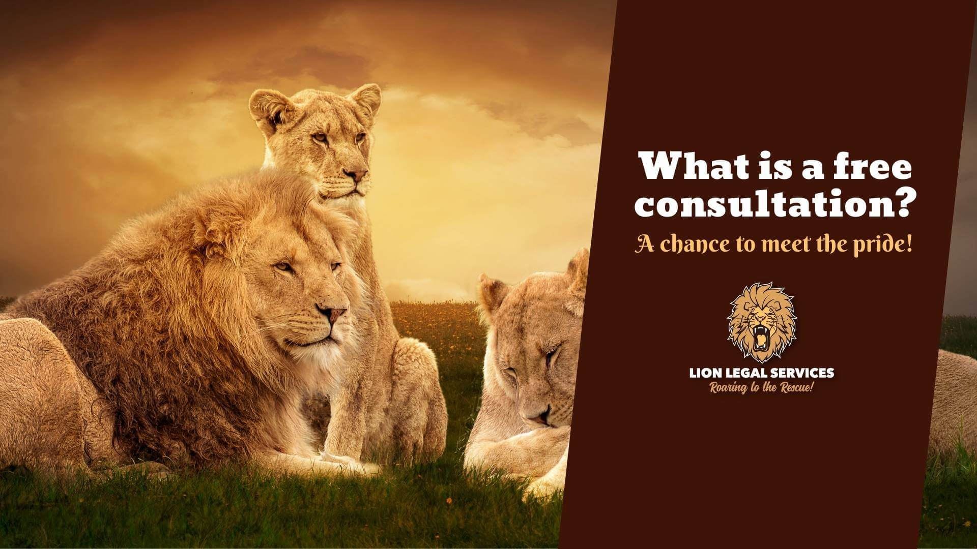 """Photo of a pride of lions with caption """"What is a free consultation?"""""""